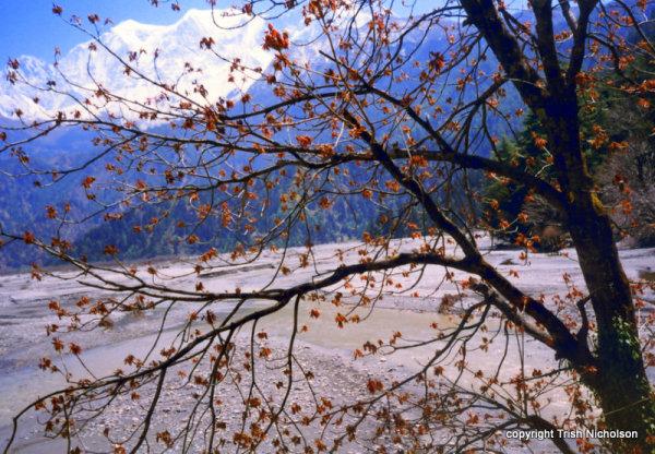 Legendary Travellers 3: Hiking with Haiku