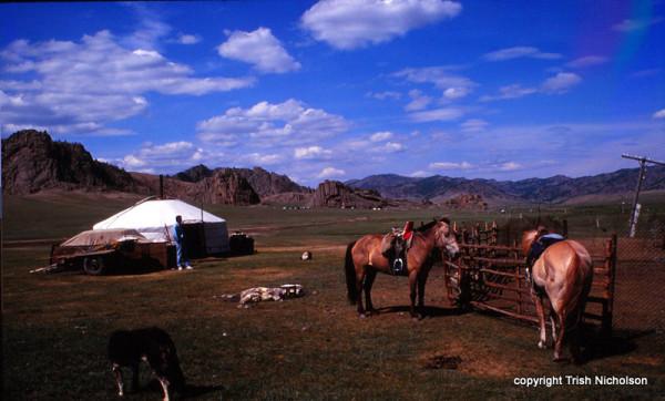 yurt and horses 3