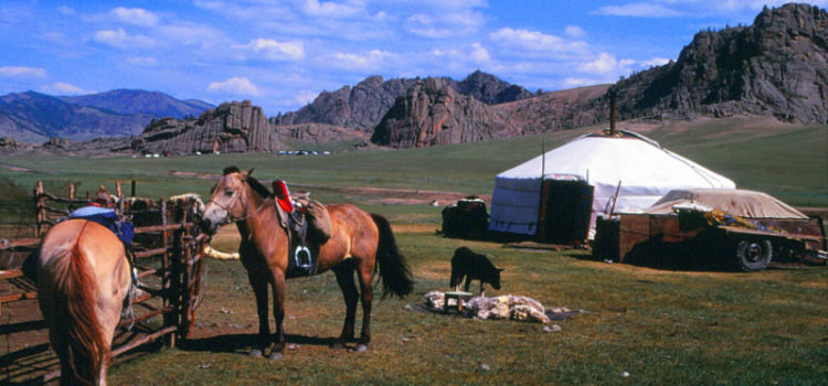 Icelandic Horses and Mongol Descendants