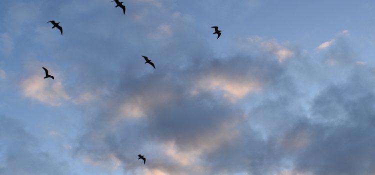 birds in a morning sky
