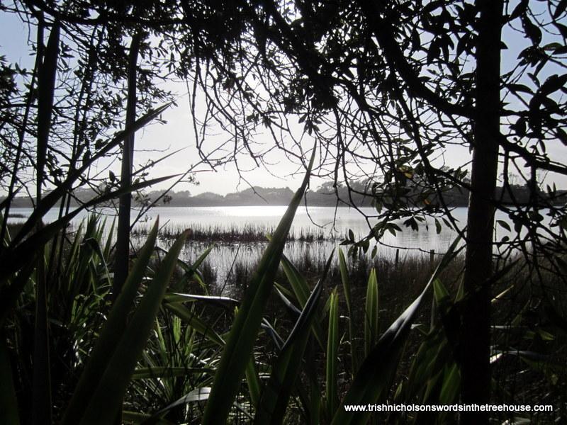 Vegetation around a dune lake.